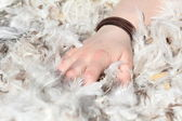 Hand grabbing in downy feathers — Stock Photo