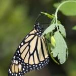 Orange butterfly — Stock Photo #23643423