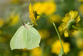 Green butterfly — Stock Photo