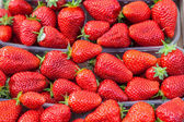 Many red ripe strawberries. — Stock fotografie