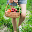 Foto Stock: Woman with basket of harvested vegetables