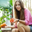 Woman picking fresh tomatoes — Stock Photo #27261747