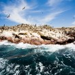 Stock Photo: Ballestas Islands, Peru