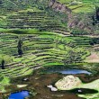 Terraced field, Colca Canyon, Peru — Stock Photo