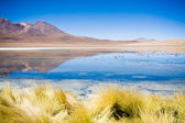 Laguna Blanca, Bolivia — Stock Photo