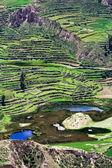 Terraced field, Colca Canyon, Peru — Stock Photo