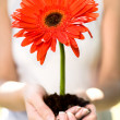 Womholding flower in dirt — Stockfoto #28262103