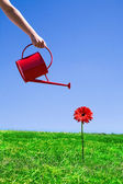 Woman watering flower — Stock Photo