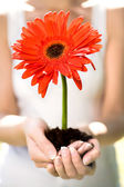 Woman holding flower in dirt — Stock Photo