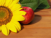 Apple and sunflower — Stock Photo