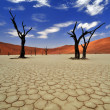 Old Friends - Dead trees, cracked soil and dunes in sossusvlei, Namib-Naukluft National Park of Namibia. - Stock Photo