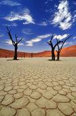Eski dostlar - ölü ağaçlar, kırık toprak ve kum tepelerine sossusvlei, Namibya namib naukluft Milli Parkı. — Stok fotoğraf