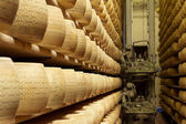 Wheels of cheese on the racks of a maturing storehouse — Stock Photo