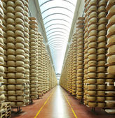 View of a maturing storehouse of parmesan cheese — Stock Photo