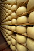 Freshly made wheels of cheese in a maturing cellar — Stock Photo