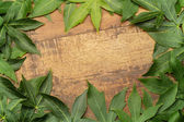 Green maple leaves on aged wood background — Stock Photo