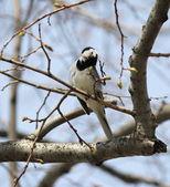 Pájaro en el banquillo — Foto de Stock