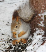 Squirrel sitting udner the tree — Stock Photo