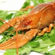 Crayfish — Stock Photo