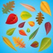 Different leaves — Stock Vector #23640907