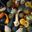Gourds — Stock Photo #37228297