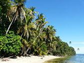 Caribbean beach — Stockfoto