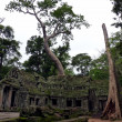 Ta Prohm ruins temple — Stock Photo