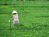 Farmer hard working — Stock Photo