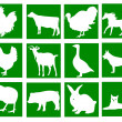 Domestic animals in the green squares — Stock Vector