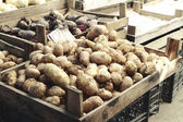 Potatoes — Photo