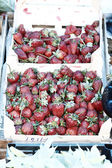 Strawberry — Photo