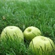 Green apple on grass — Stock Photo