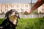 Portrait a dog — Stockfoto