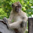 A monkey is sitting on a wooden handrail - Stock Photo