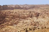 Berge von jordanien — Stockfoto