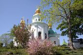 Kievo-Pecherskaya Lavra. Flowering almond trees — Stock Photo