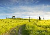 Italy. Landscapes of Tuscany — Stock Photo