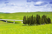 Rural landscape with a road bridge — Stockfoto