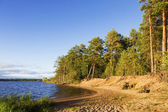 Landscape with pine trees on the shores of lake — Stock Photo