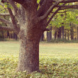 Solitude tree in a park — Stock Photo