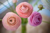 Ranunculus bouquet on craft paper — Stok fotoğraf