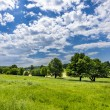 Summer field with cloudy blue sky — Stock Photo