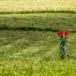 Stock Photo: Lonely red flowers in meadow