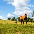 Stock Photo: Brown horse standing in hillside meadow