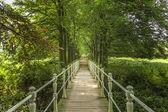 Houten brug leidt naar een bos — Stockfoto