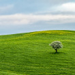Stock Photo: Single tree in spring meadow