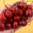 Cherries — Stock Photo #40314597
