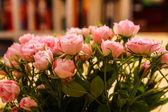 Roses — Stock Photo