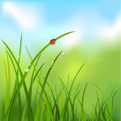 Background with grass, dew, ladybug — Stock Vector