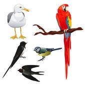 Ensemble de différentes espèces d'oiseaux — Vecteur